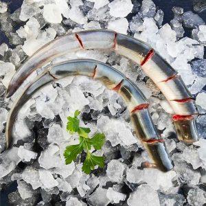 comprar anguila fresca mediterraneo