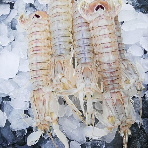 Comprar Galera pescado marisco