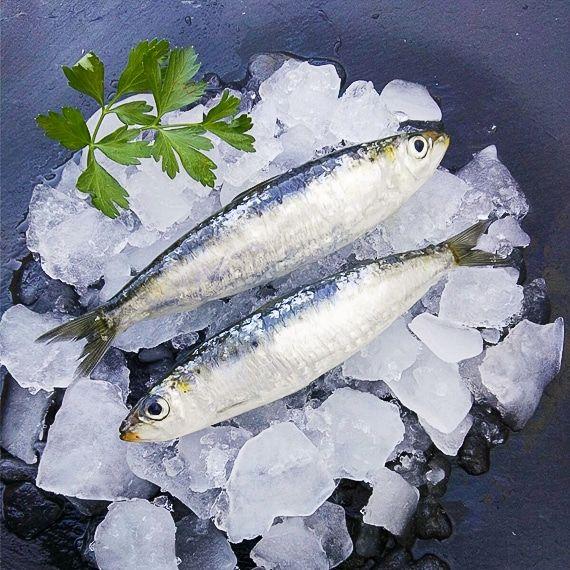 comprar sardina mediterranea