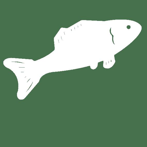 Pescadería online. Pescado Blanco