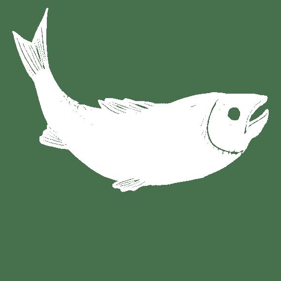 Pescado Salvaje