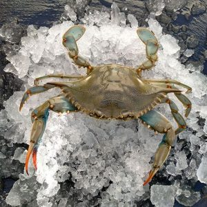 Comprar cangrejo azul mediterráneo delta rapita